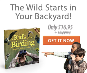 birding, bird watching, backyard wildlife habitat