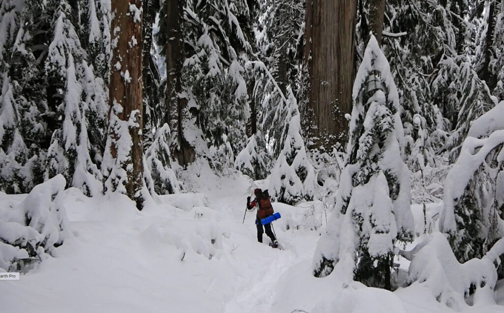 snowshoeing in the Pacific Northwest
